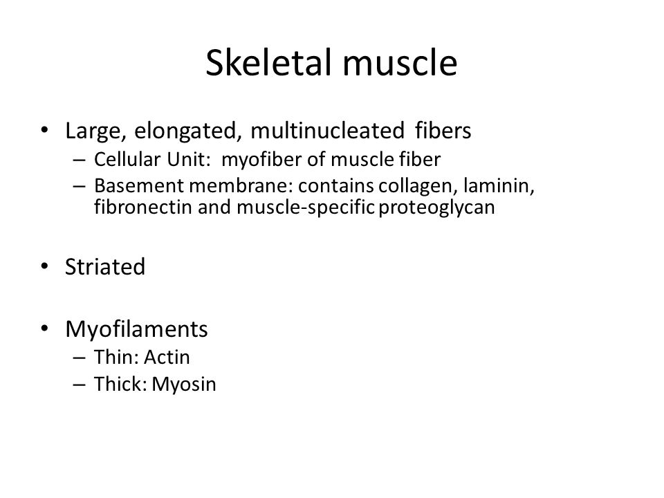 Skeletal muscle Large, elongated, multinucleated fibers – Cellular Unit: myofiber of muscle fiber – Basement membrane: contains collagen, laminin, fib