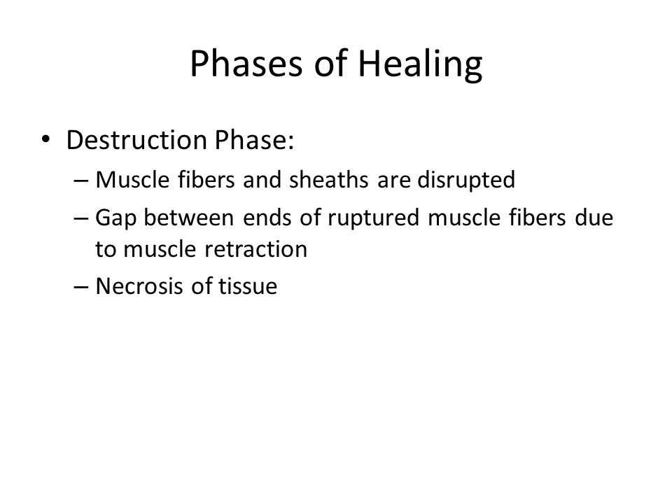 Phases of Healing Destruction Phase: – Muscle fibers and sheaths are disrupted – Gap between ends of ruptured muscle fibers due to muscle retraction – Necrosis of tissue