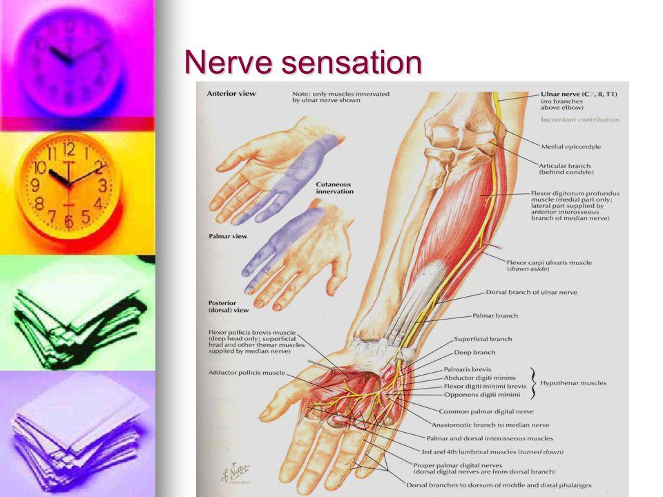 Nerve sensation