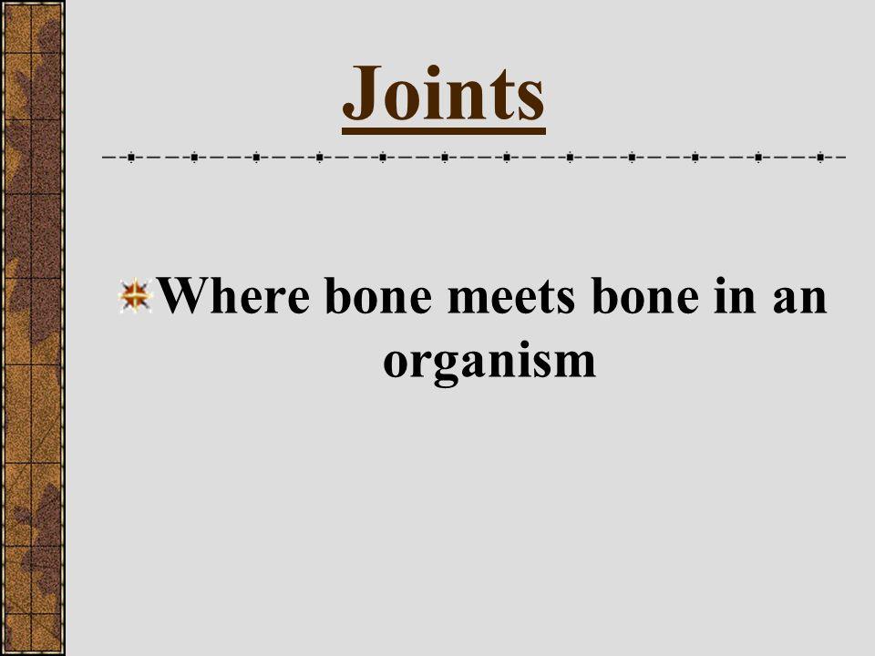 Bones Label the diagram
