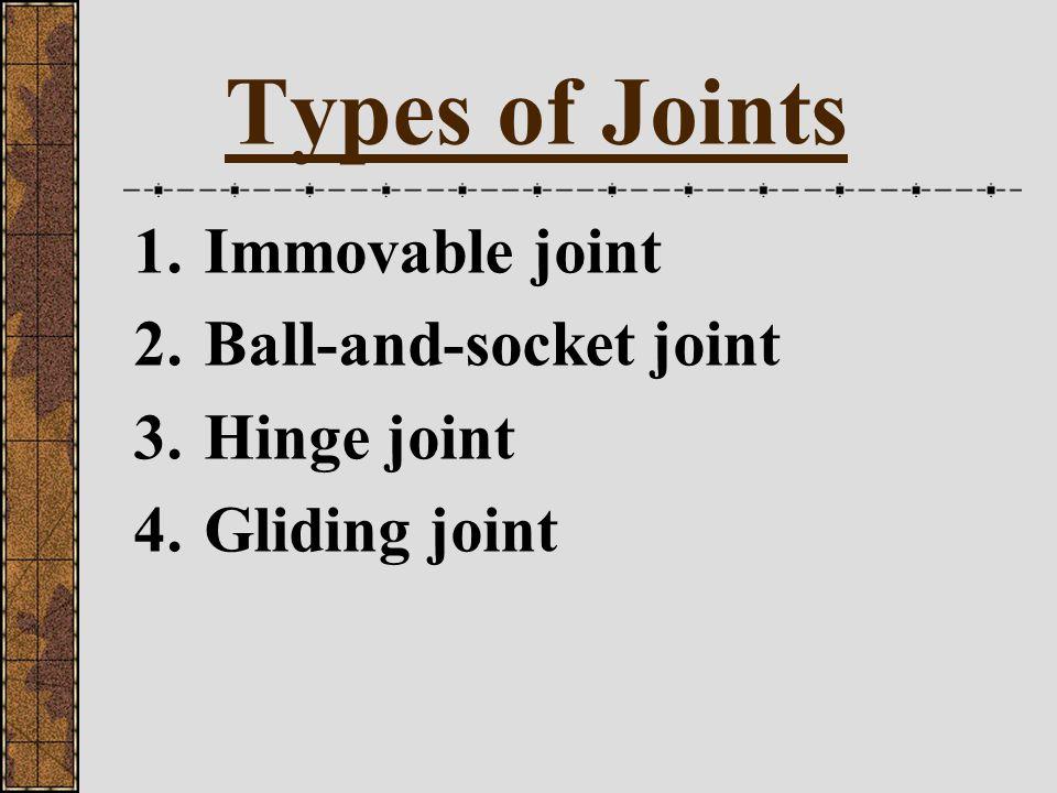 Joints Where bone meets bone in an organism