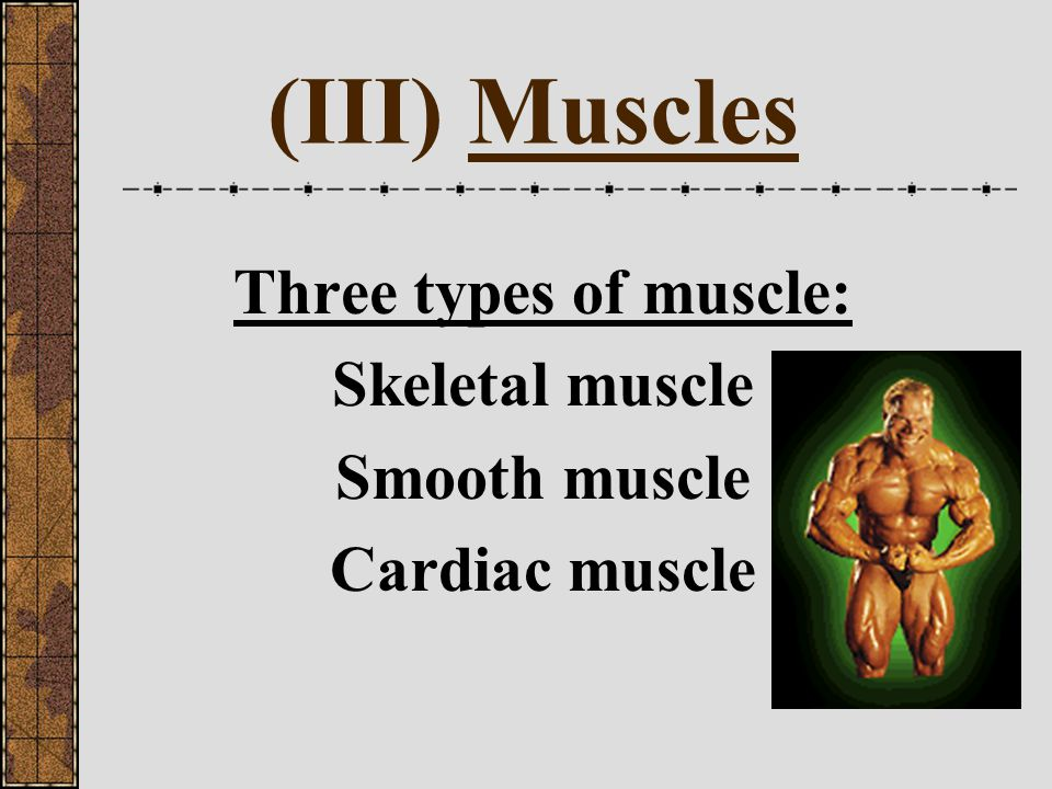 Do Now 2/9 What are the Three types of muscle?