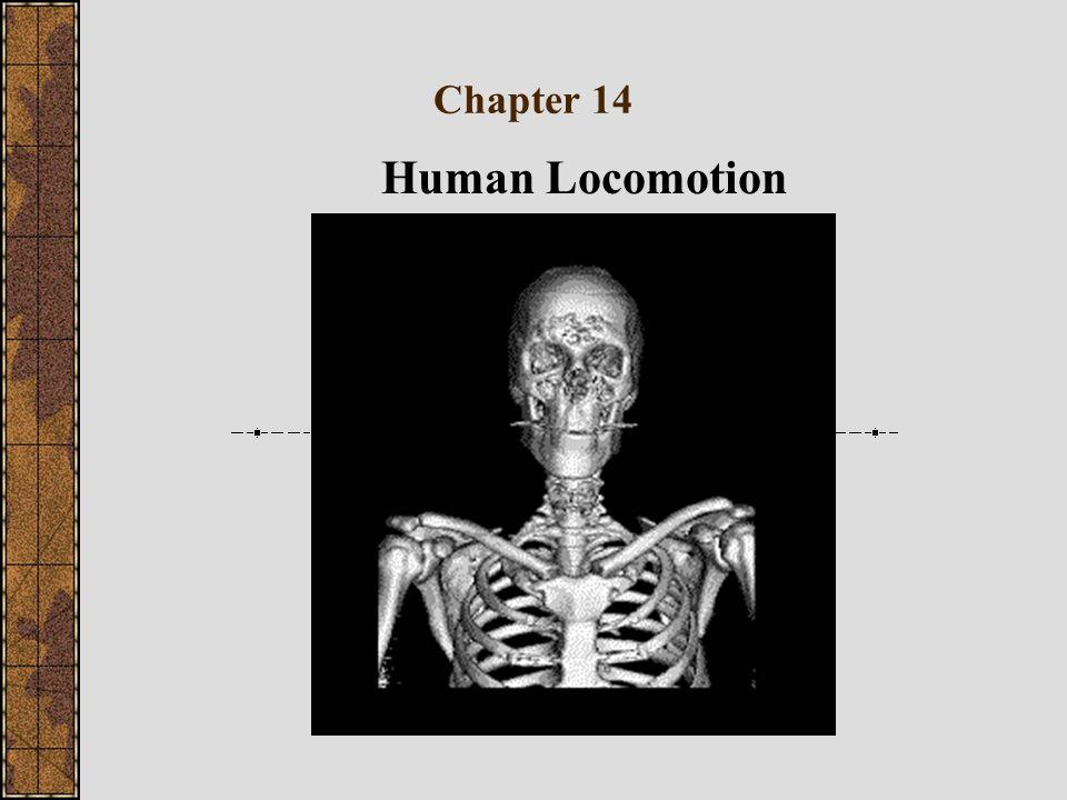 Chapter 14 Human Locomotion