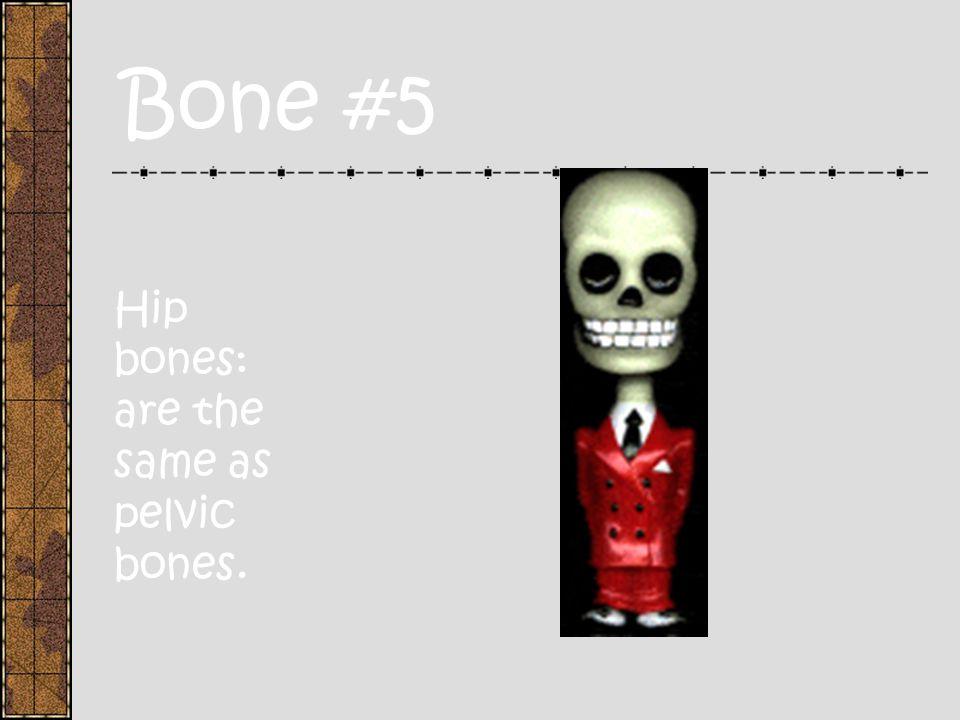 Bones #4 Pectoral Girdle: consists of the shoulder blades and collar bones.