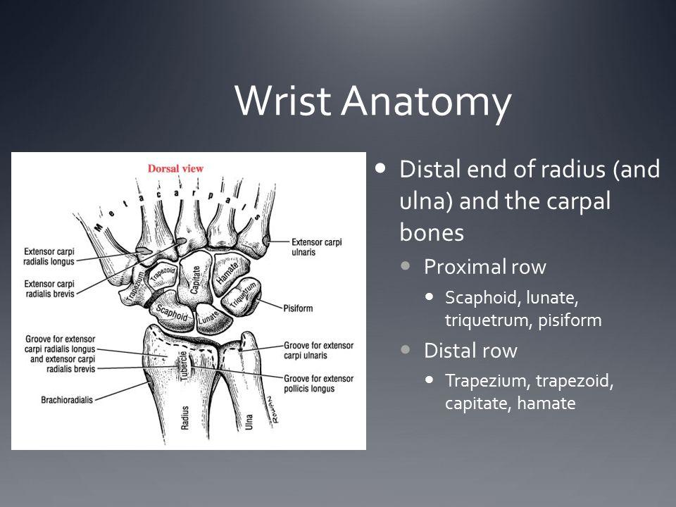 Wrist Anatomy Distal end of radius (and ulna) and the carpal bones Proximal row Scaphoid, lunate, triquetrum, pisiform Distal row Trapezium, trapezoid