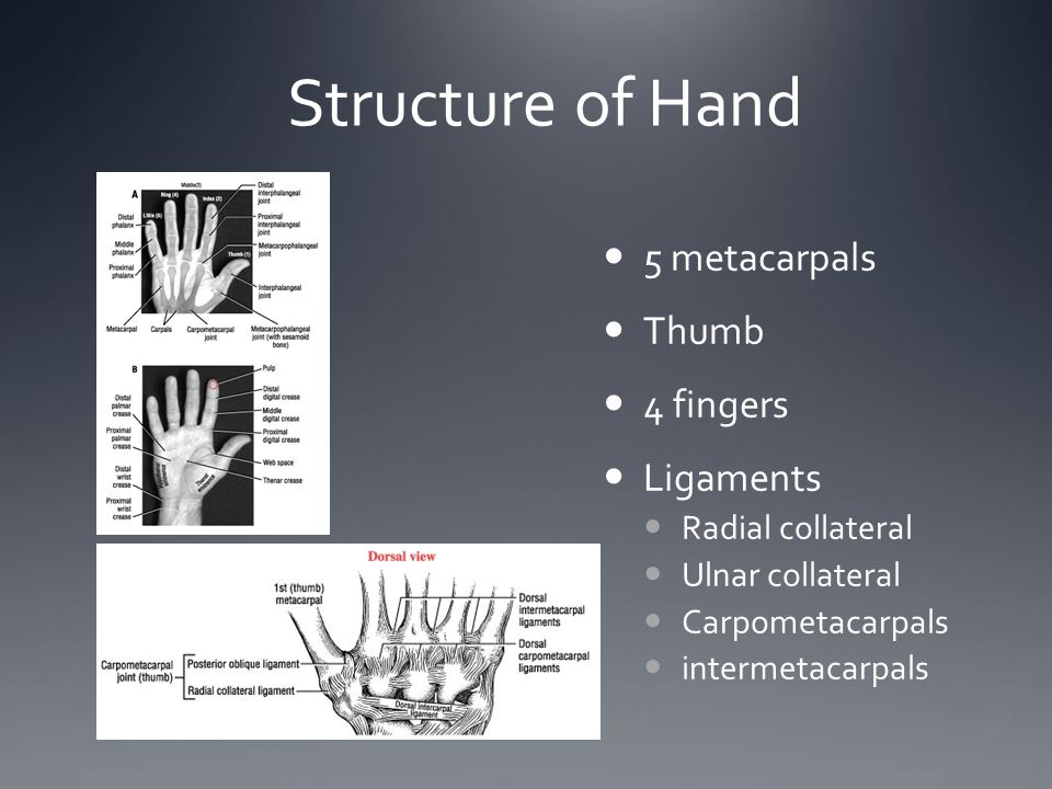 Structure of Hand 5 metacarpals Thumb 4 fingers Ligaments Radial collateral Ulnar collateral Carpometacarpals intermetacarpals
