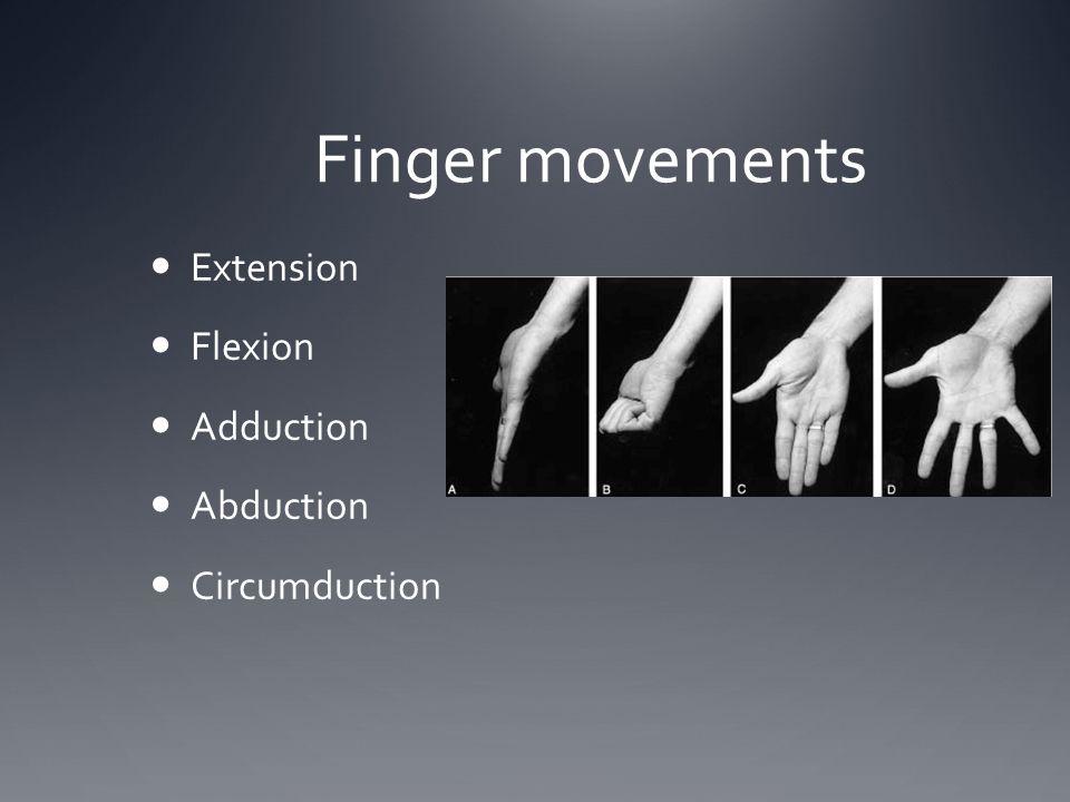 Finger movements Extension Flexion Adduction Abduction Circumduction