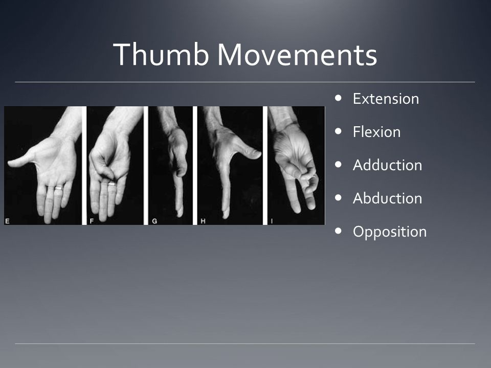 Thumb Movements Extension Flexion Adduction Abduction Opposition