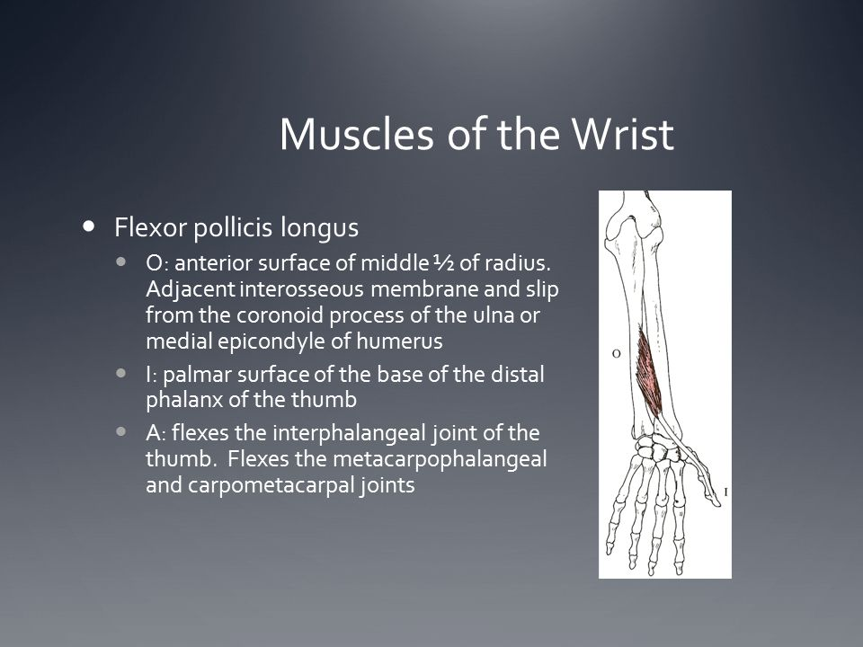 Muscles of the Wrist Flexor pollicis longus O: anterior surface of middle ½ of radius. Adjacent interosseous membrane and slip from the coronoid proce