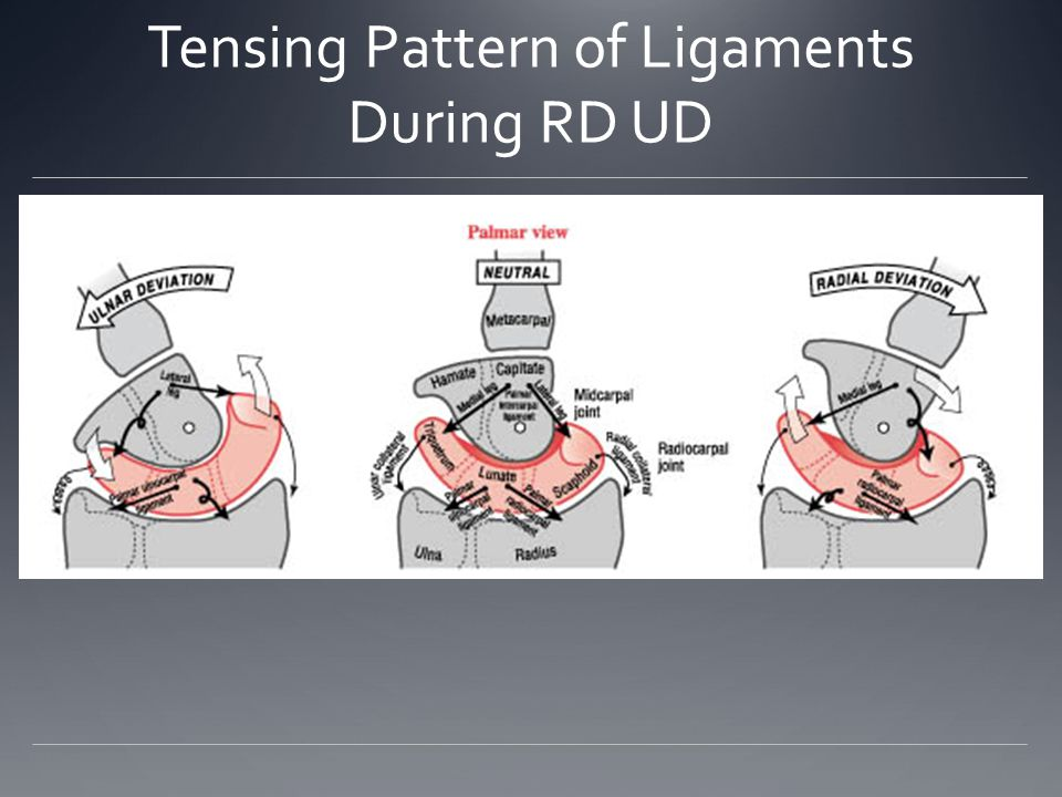 Tensing Pattern of Ligaments During RD UD