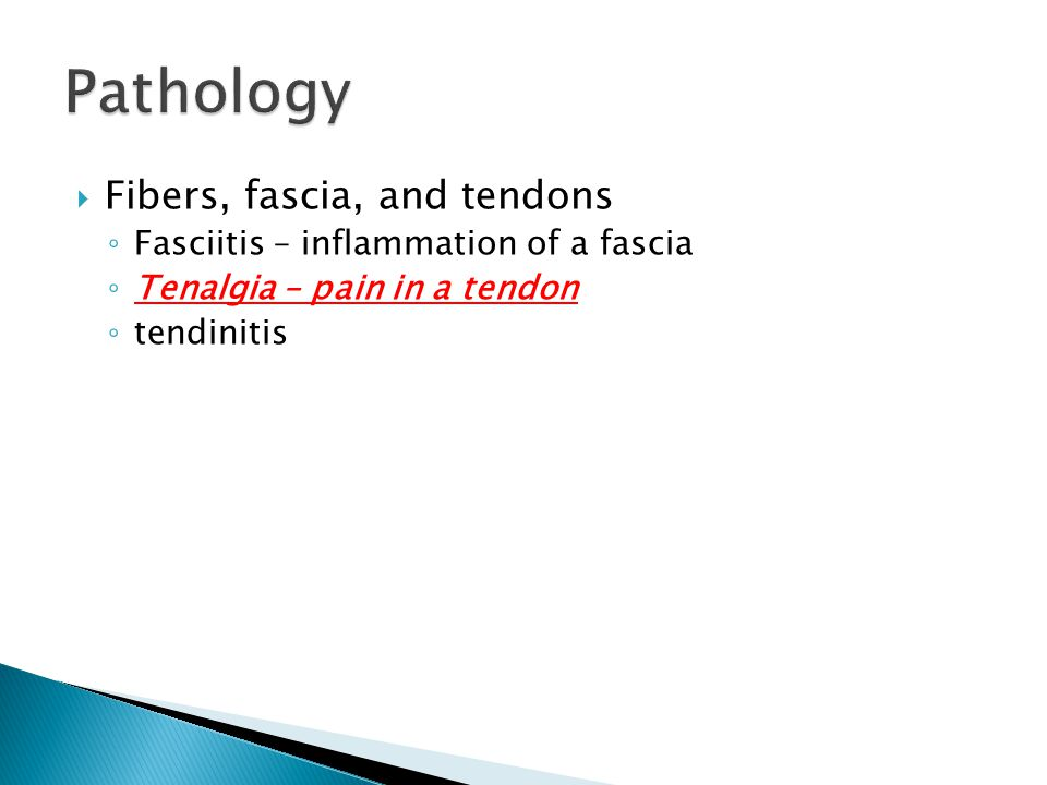  Fibers, fascia, and tendons ◦ Fasciitis – inflammation of a fascia ◦ Tenalgia – pain in a tendon ◦ tendinitis