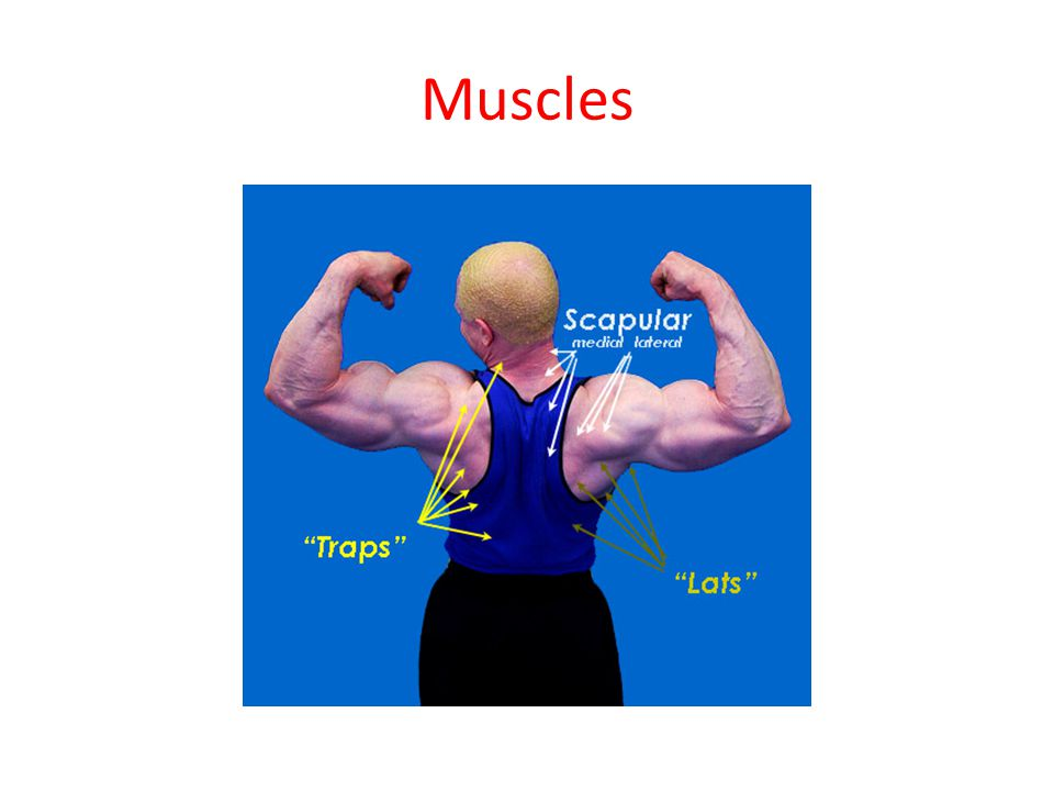 Function of Muscle 1.Muscle tissue is responsible for all body movements.