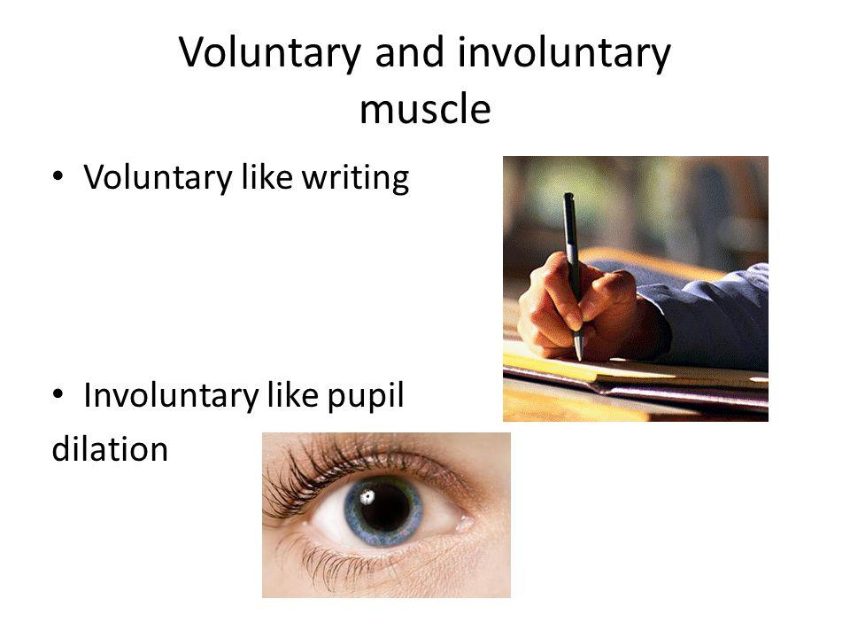 Voluntary and involuntary muscle Voluntary like writing Involuntary like pupil dilation