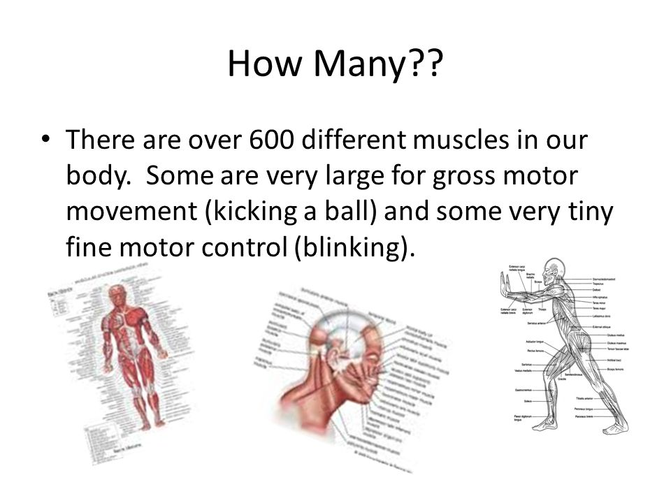 Muscle Concepts Transient Hypertrophy – Muscle temporarily get larger during exercise due to increased blood flow.
