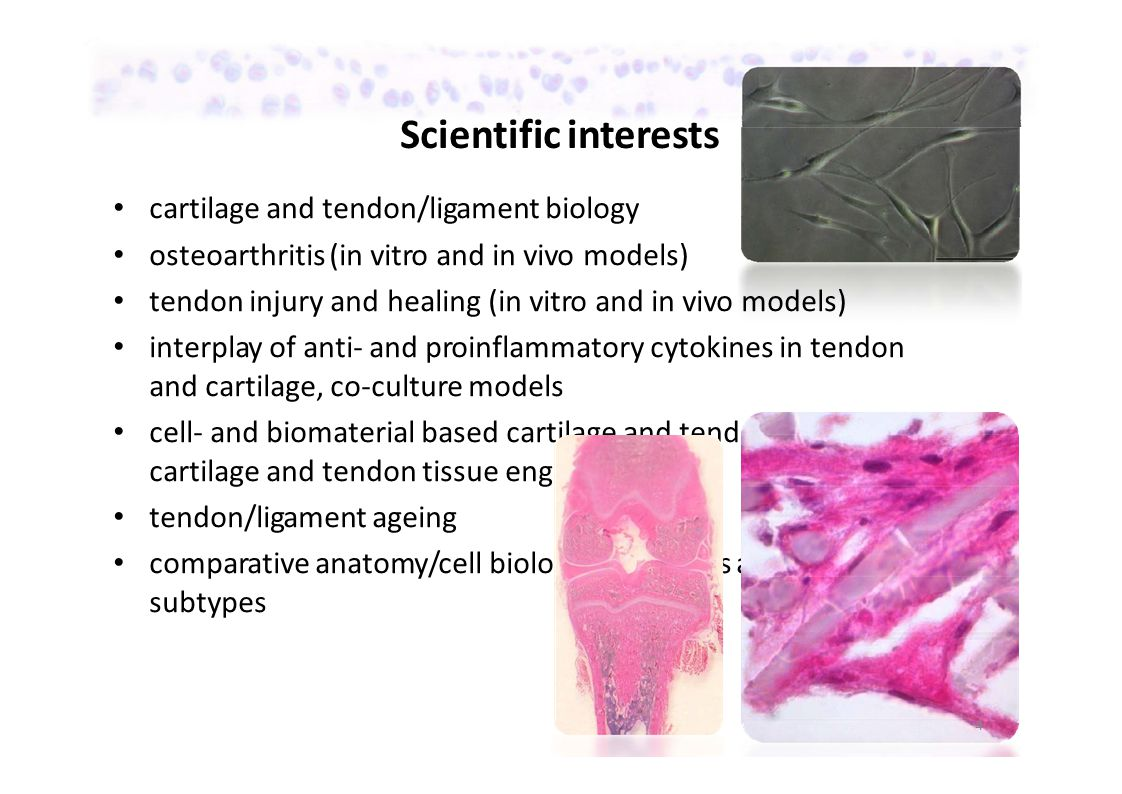 Scientific interests cartilage and tendon/ligament biology osteoarthritis (in vitro and in vivo models) tendon injury and healing (in vitro and in vivo models) interplay of anti‐ and proinflammatory cytokines in tendon and cartilage, co‐culture models cell‐ and biomaterial based cartilage and tendon repair: cartilage and tendon tissue engineering tendon/ligament ageing comparative anatomy/cell biology of tendons and cartilage subtypes 4