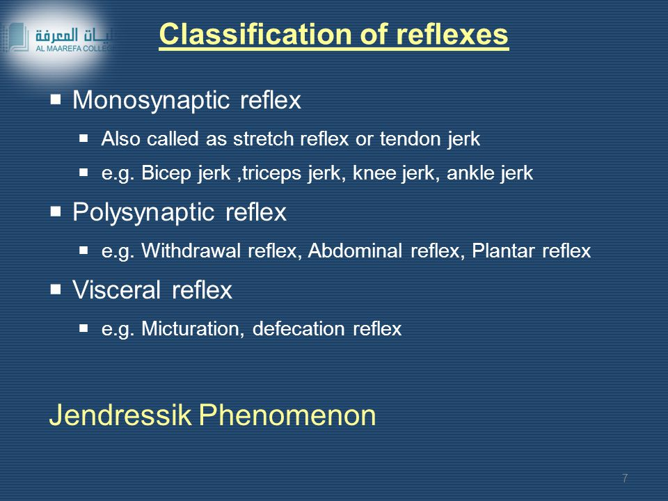 Classification of reflexes  Monosynaptic reflex  Also called as stretch reflex or tendon jerk  e.g.