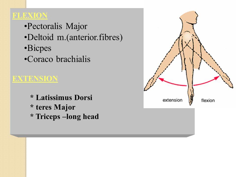 FLEXION Pectoralis Major Deltoid m.(anterior.fibres) Bicpes Coraco brachialis EXTENSION * Latissimus Dorsi * teres Major * Triceps –long head