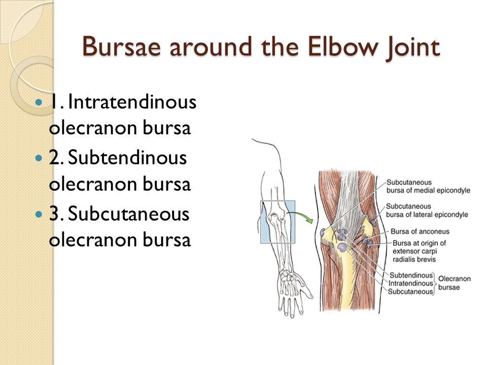 Bursae around the Elbow Joint 1.Intratendinous olecranon bursa 2.