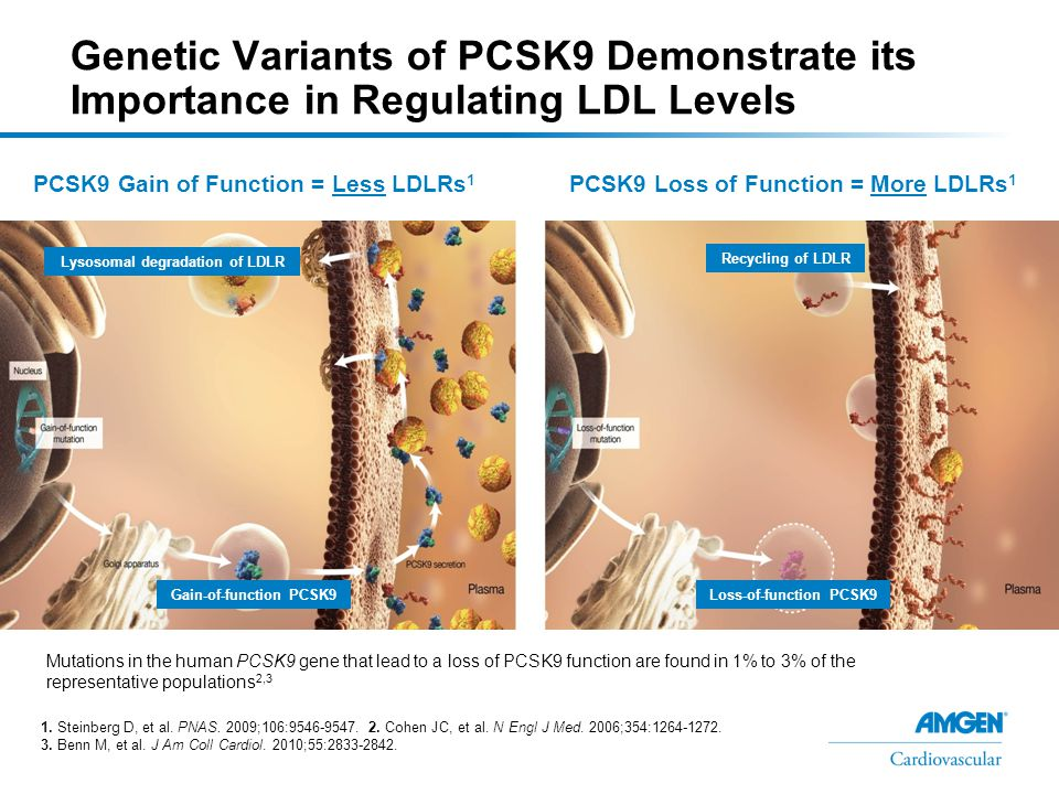 PCSK9 C679X -Associated Cholesterol Lowering in a Population With Low LDL-C –A total of 653 young black women from Zimbabwe, a population in which basal LDL-C is already low, were examined –C679X mutation occurred in 3.7% of subjects (24 out of 653) One homozygous PCSK9 C679X/C679X subject was identified PCSK9 C679X was associated with a 27% reduction in LDL-C (carriers [heterozygotes] versus noncarriers) Adapted from Hooper AJ, et al.