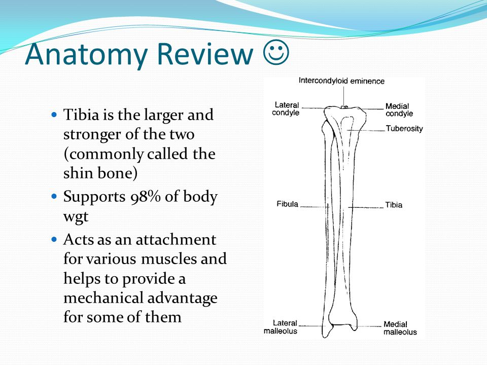 Anatomy Review Normal foot contains 26 bones that are interconnected and supported by numerous ligaments Many joints within the foot also assist with support and movement