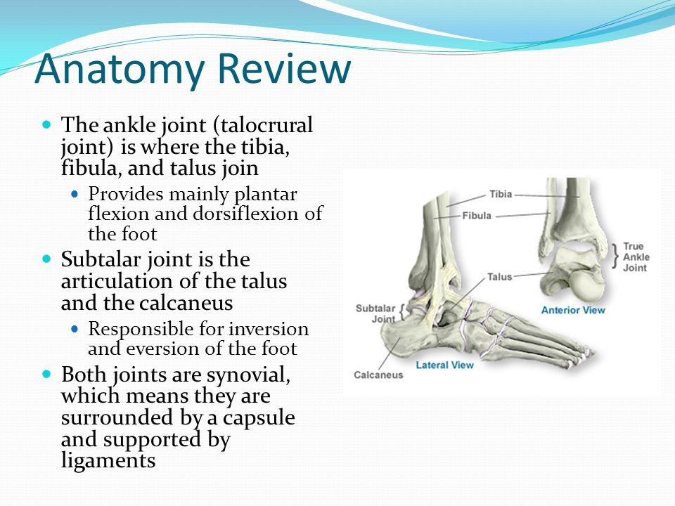 Anatomy Review The ankle joint is supported on the medial side by the large and strong deltoid ligament On the lateral side, the joint is supported by the anterior talofibular, the posterior talofibular, and the calcanefibular ligaments