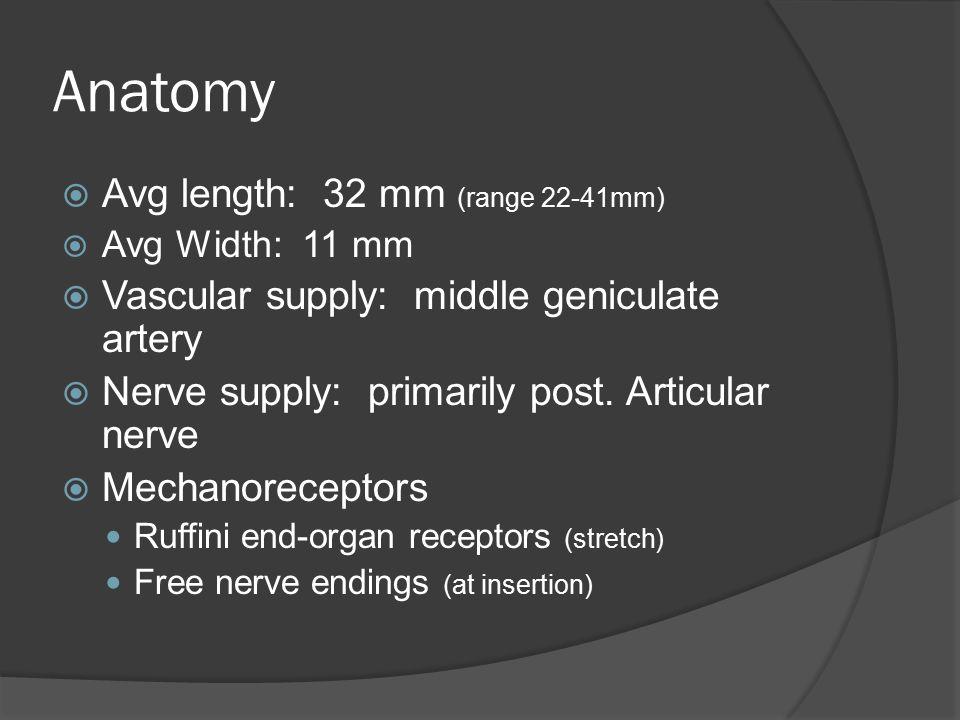  Avg length: 32 mm (range 22-41mm)  Avg Width: 11 mm  Vascular supply: middle geniculate artery  Nerve supply: primarily post. Articular nerve  M