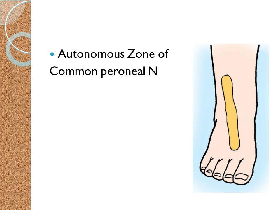 Autonomous Zone of Common peroneal N