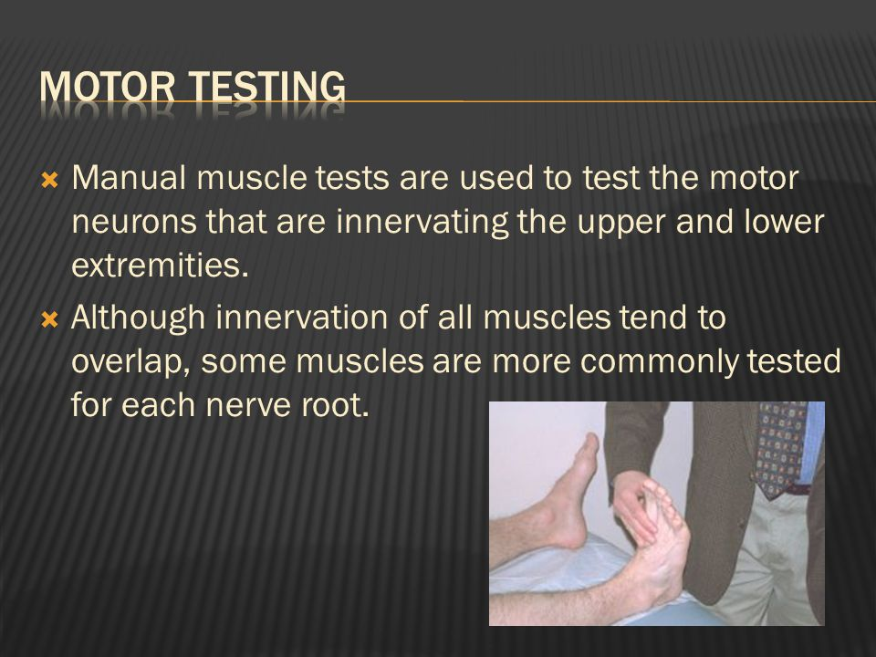  Manual muscle tests are used to test the motor neurons that are innervating the upper and lower extremities.
