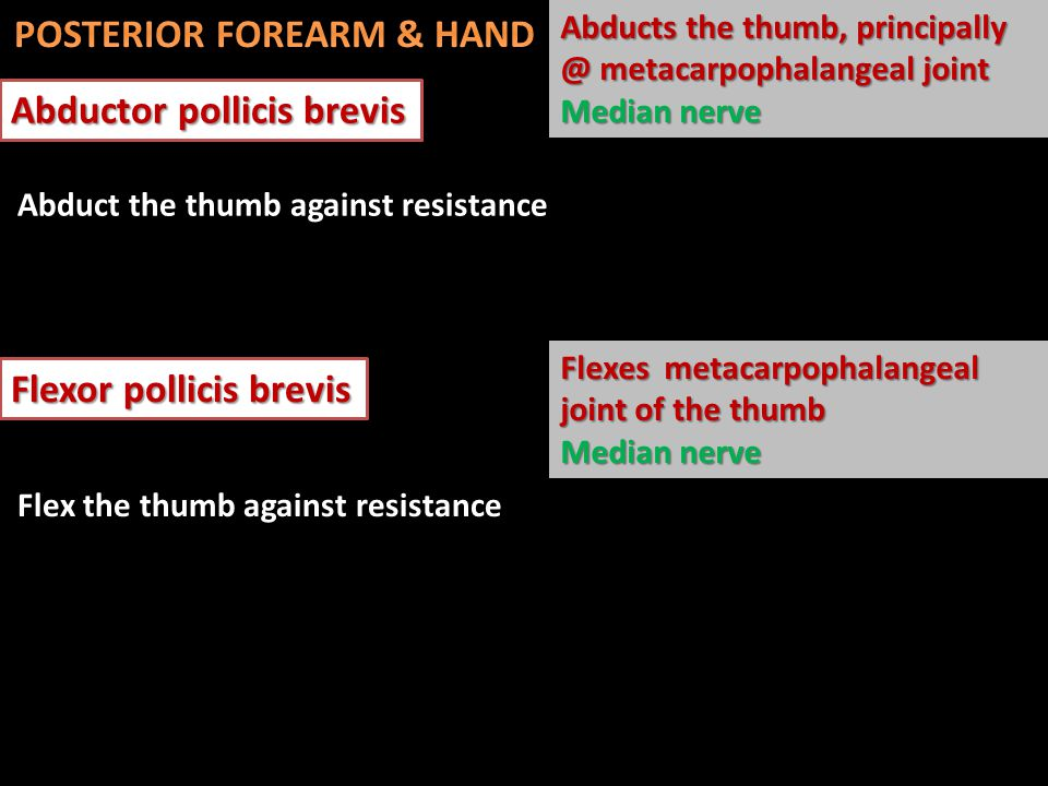 Abductor pollicis brevis Abducts the thumb, principally @ metacarpophalangeal joint Median nerve Flexor pollicis brevis Flexes metacarpophalangeal joi