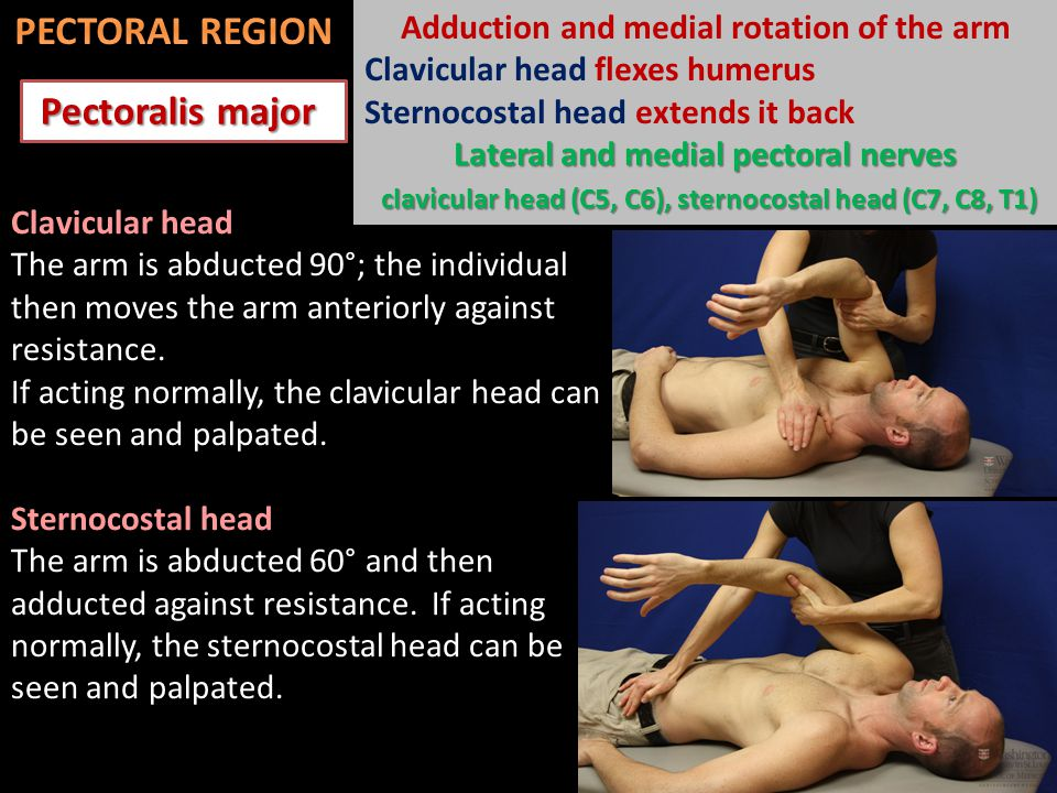 Pectoralis major Pectoralis major Clavicular head The arm is abducted 90°; the individual then moves the arm anteriorly against resistance.