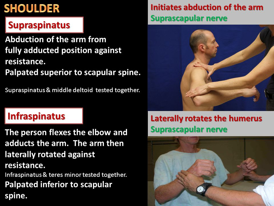 Degenerative tendonitis of the rotator cuff The person is asked to lower the fully abducted limb slowly and smoothly.