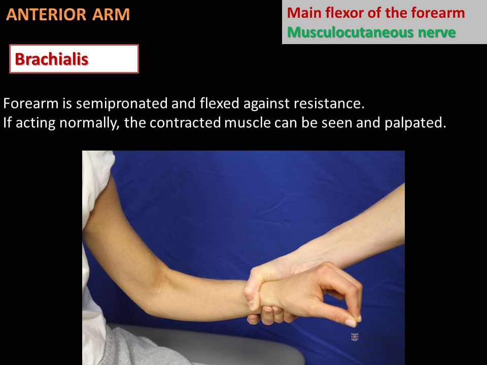 Extensor carpi ulnaris Extends and adducts hand @ wrist Deep branch of radial nerve Forearm pronated & fingers are extended Extended wrist is then adducted against resistance.