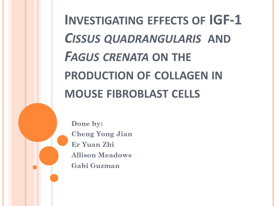 I NVESTIGATING EFFECTS OF IGF-1 C ISSUS QUADRANGULARIS AND F AGUS CRENATA ON THE PRODUCTION OF COLLAGEN IN MOUSE FIBROBLAST CELLS Done by: Cheng Yong