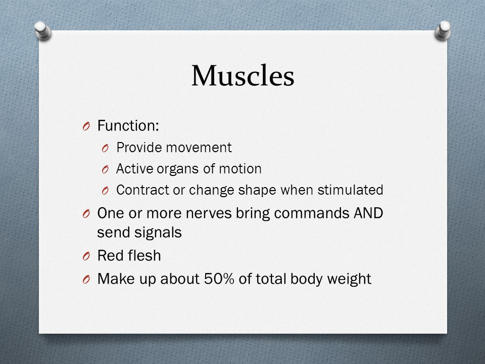 Muscles O Function: O Provide movement O Active organs of motion O Contract or change shape when stimulated O One or more nerves bring commands AND se
