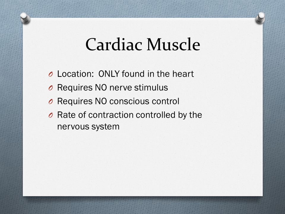 Cardiac Muscle O Location: ONLY found in the heart O Requires NO nerve stimulus O Requires NO conscious control O Rate of contraction controlled by th