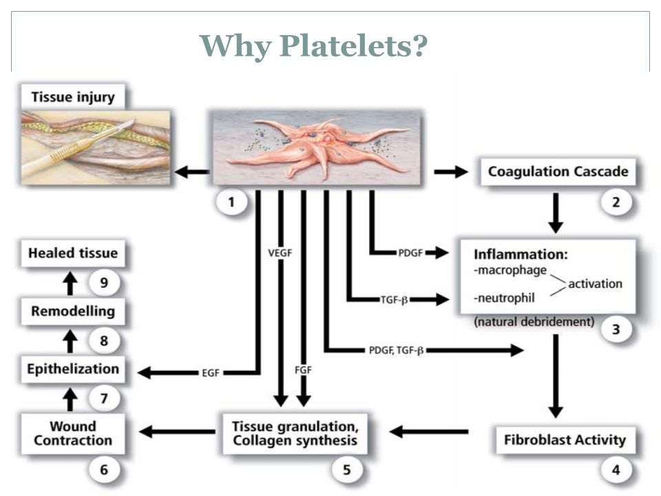 Why Platelets?