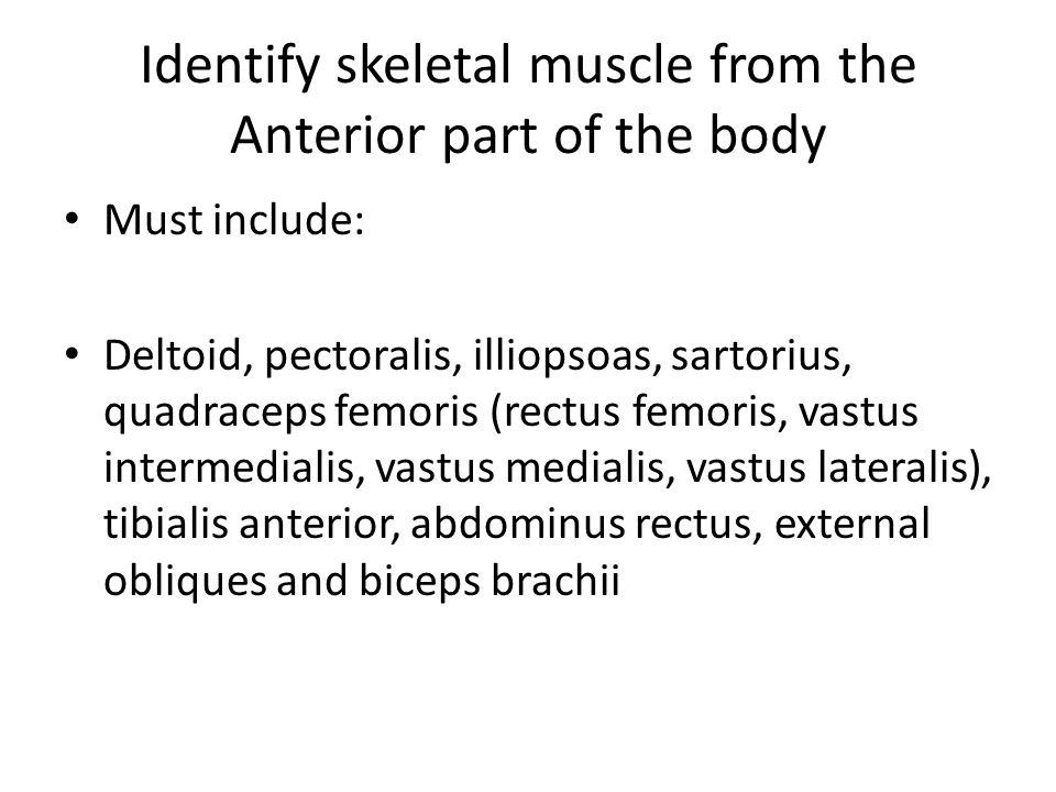Identify skeletal muscle from the Anterior part of the body Must include: Deltoid, pectoralis, illiopsoas, sartorius, quadraceps femoris (rectus femoris, vastus intermedialis, vastus medialis, vastus lateralis), tibialis anterior, abdominus rectus, external obliques and biceps brachii