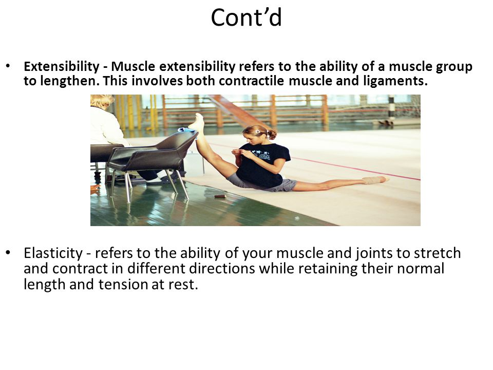 Cont'd Extensibility - Muscle extensibility refers to the ability of a muscle group to lengthen.