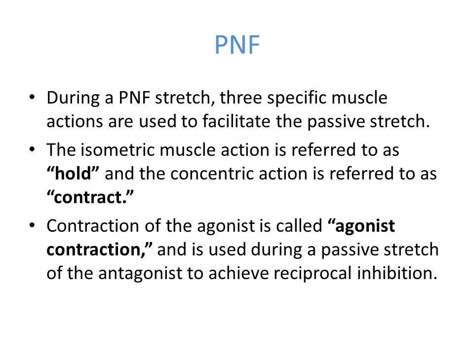 """PNF During a PNF stretch, three specific muscle actions are used to facilitate the passive stretch. The isometric muscle action is referred to as """"hol"""