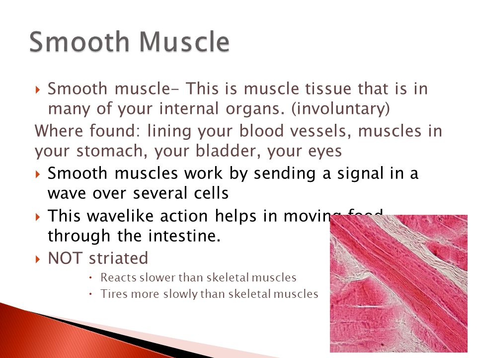  Smooth muscle- This is muscle tissue that is in many of your internal organs. (involuntary) Where found: lining your blood vessels, muscles in your