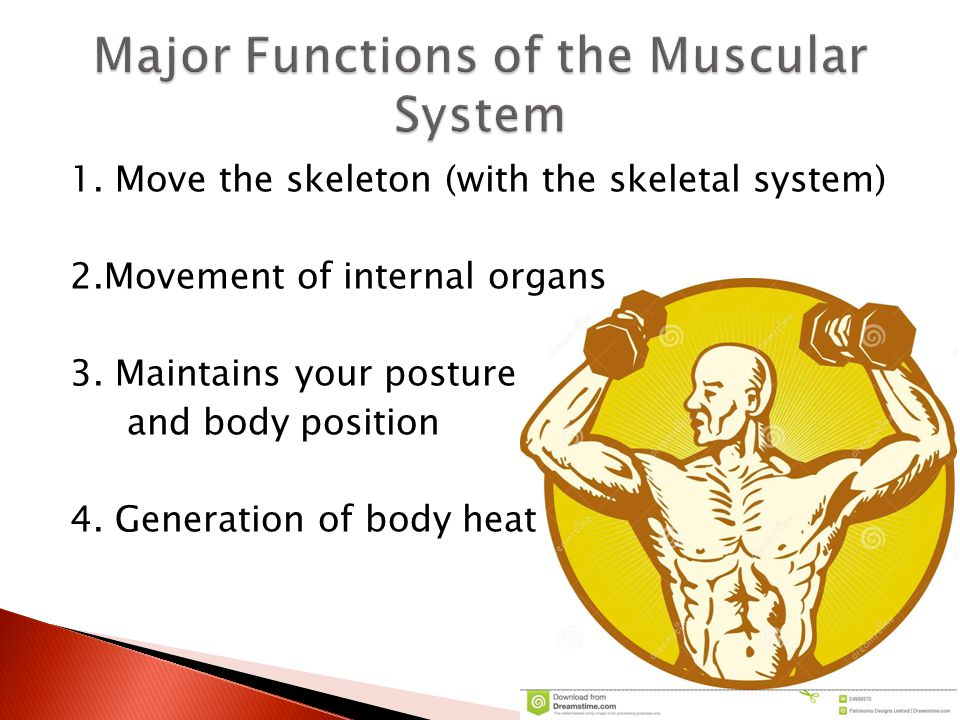 1. Move the skeleton (with the skeletal system) 2.Movement of internal organs 3. Maintains your posture and body position 4. Generation of body heat