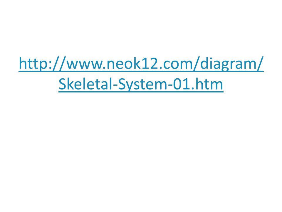 http://www.neok12.com/diagram/ Skeletal-System-01.htm