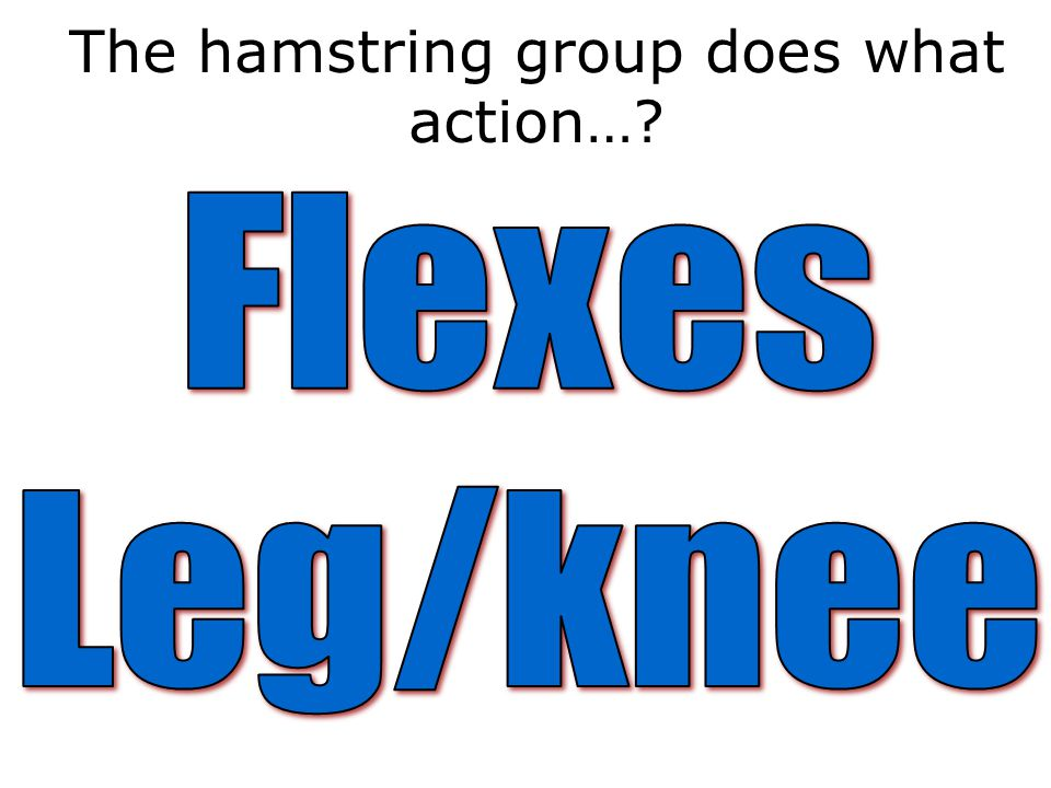 The hamstring group does what action…?
