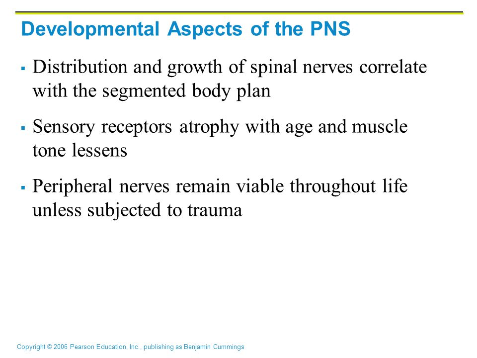 Copyright © 2006 Pearson Education, Inc., publishing as Benjamin Cummings Developmental Aspects of the PNS  Distribution and growth of spinal nerves correlate with the segmented body plan  Sensory receptors atrophy with age and muscle tone lessens  Peripheral nerves remain viable throughout life unless subjected to trauma