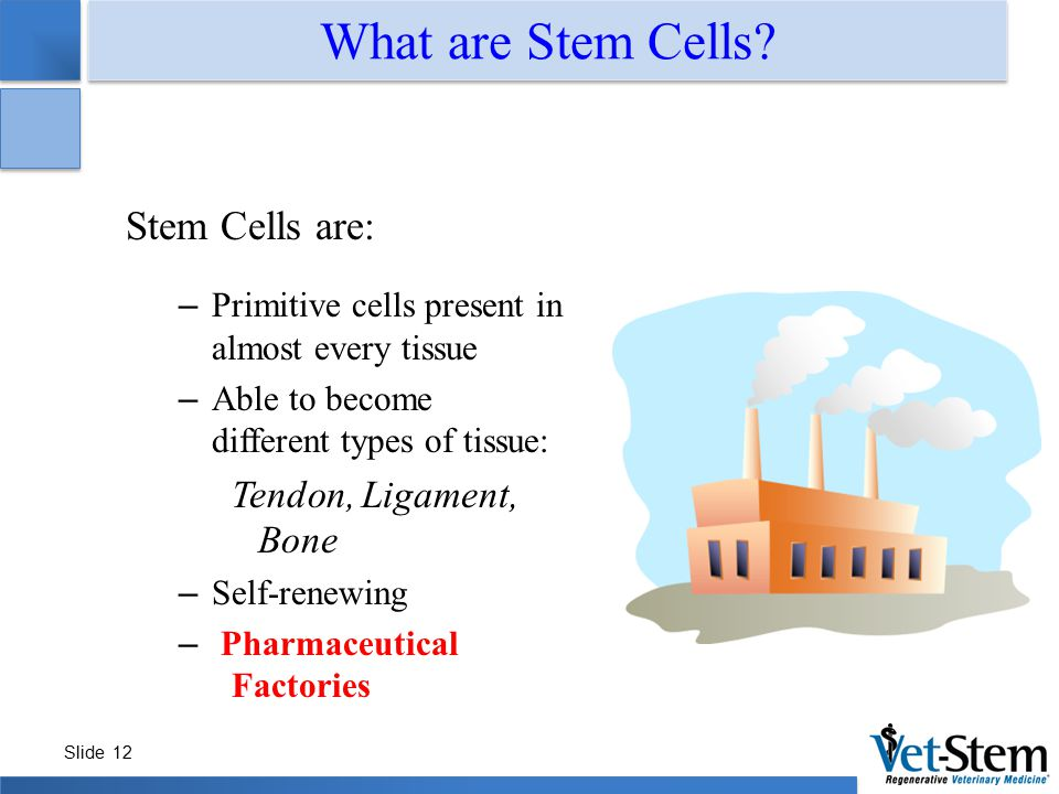 Slide 12 What are Stem Cells? Stem Cells are: – Primitive cells present in almost every tissue – Able to become different types of tissue: Tendon, Lig