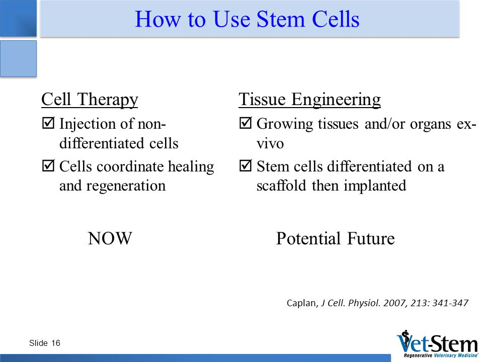 Slide 16 How to Use Stem Cells Caplan, J Cell. Physiol. 2007, 213: 341-347 Cell Therapy  Injection of non- differentiated cells  Cells coordinate he