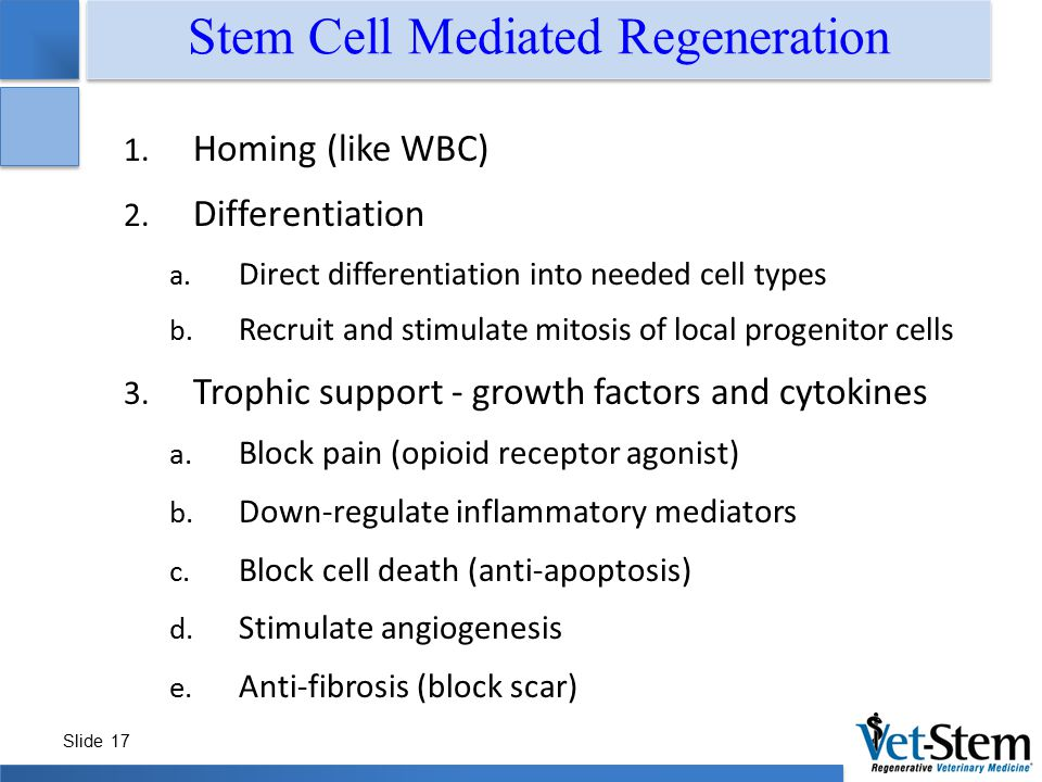 Slide 17 Stem Cell Mediated Regeneration 1. Homing (like WBC) 2. Differentiation a. Direct differentiation into needed cell types b. Recruit and stimu