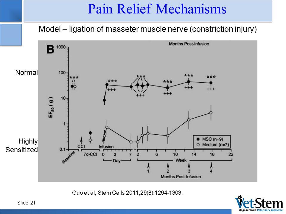 Slide 21 Model – ligation of masseter muscle nerve (constriction injury) Pain Relief Mechanisms Guo et al, Stem Cells 2011;29(8):1294-1303.