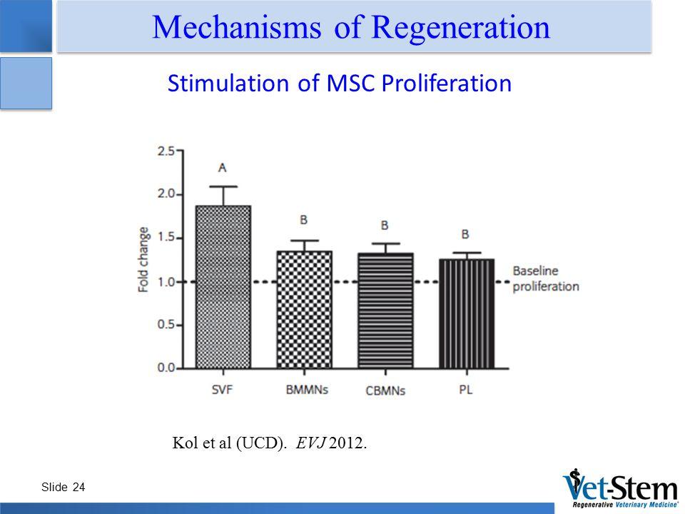 Slide 24 Mechanisms of Regeneration Stimulation of MSC Proliferation Kol et al (UCD). EVJ 2012.