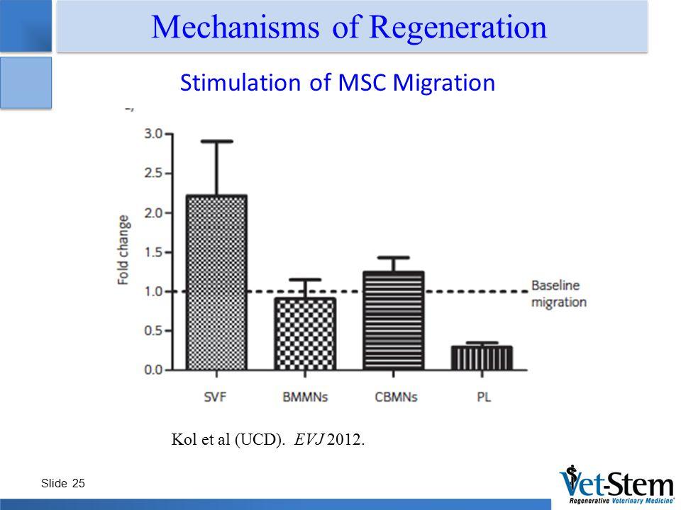 Slide 25 Mechanisms of Regeneration Stimulation of MSC Migration Kol et al (UCD). EVJ 2012.